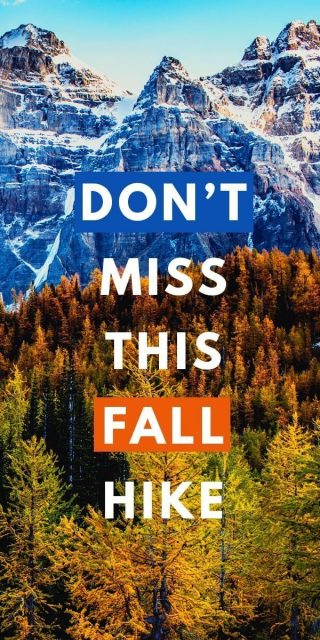 Best Fall Hike in Alberta to see Larch Trees at Larch Valley and Sentinel Pass