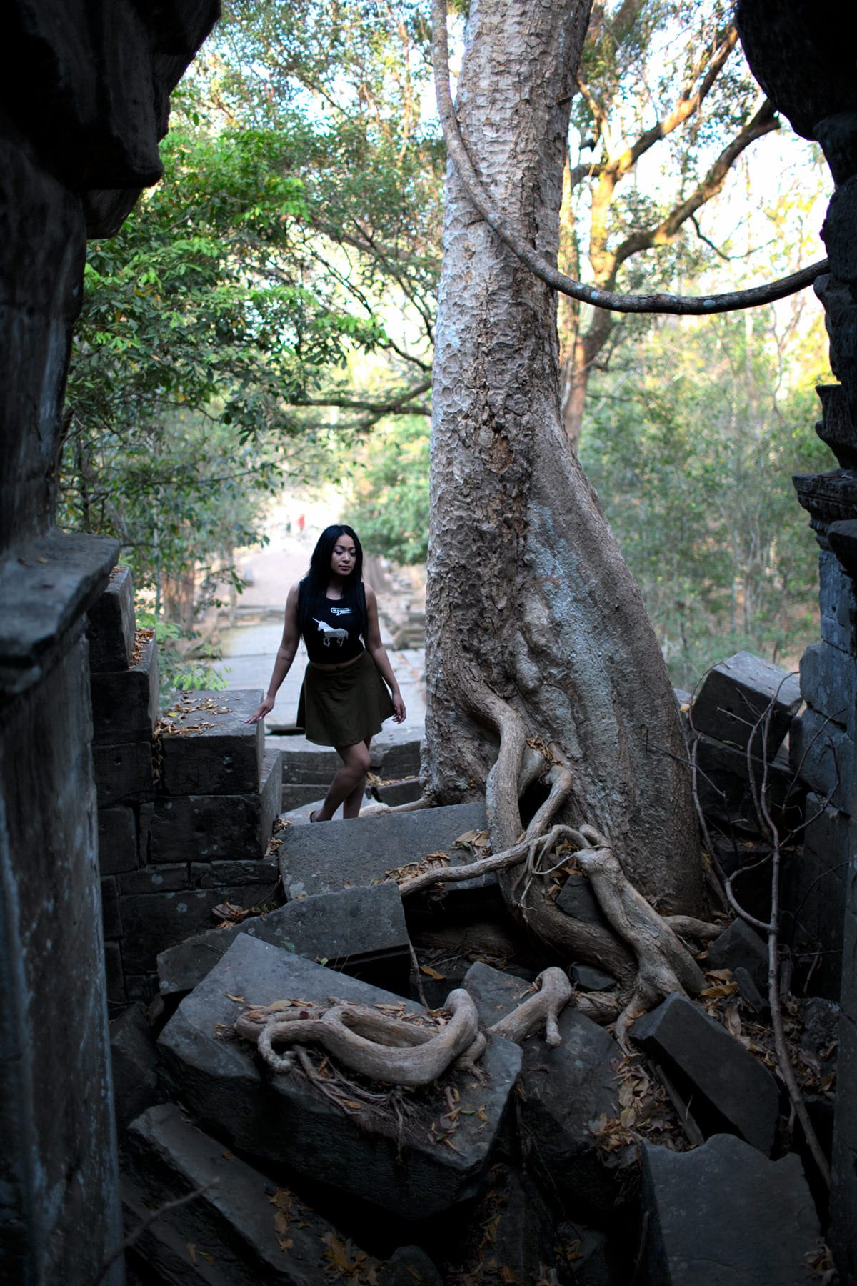 Beng Mealea tree growing inside temple ruin