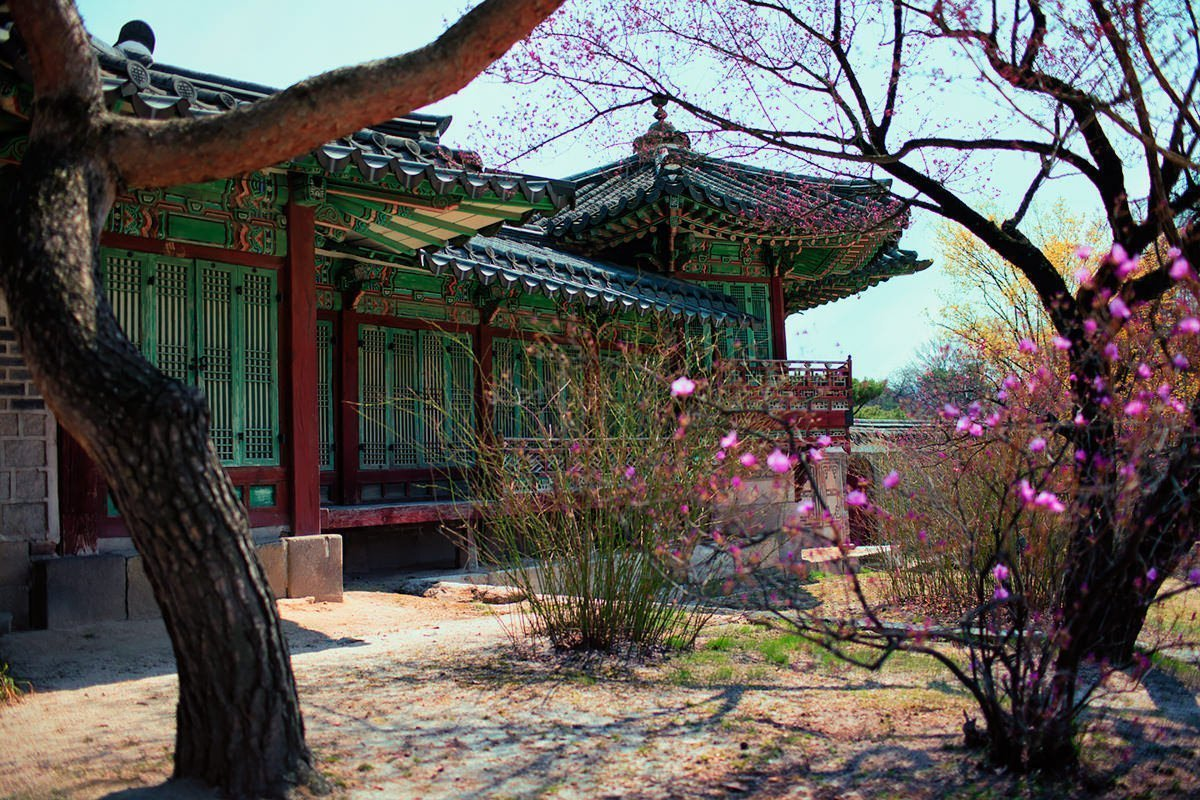 One of the many beautiful architecture and spring blossoms at Changdeokgung Palace