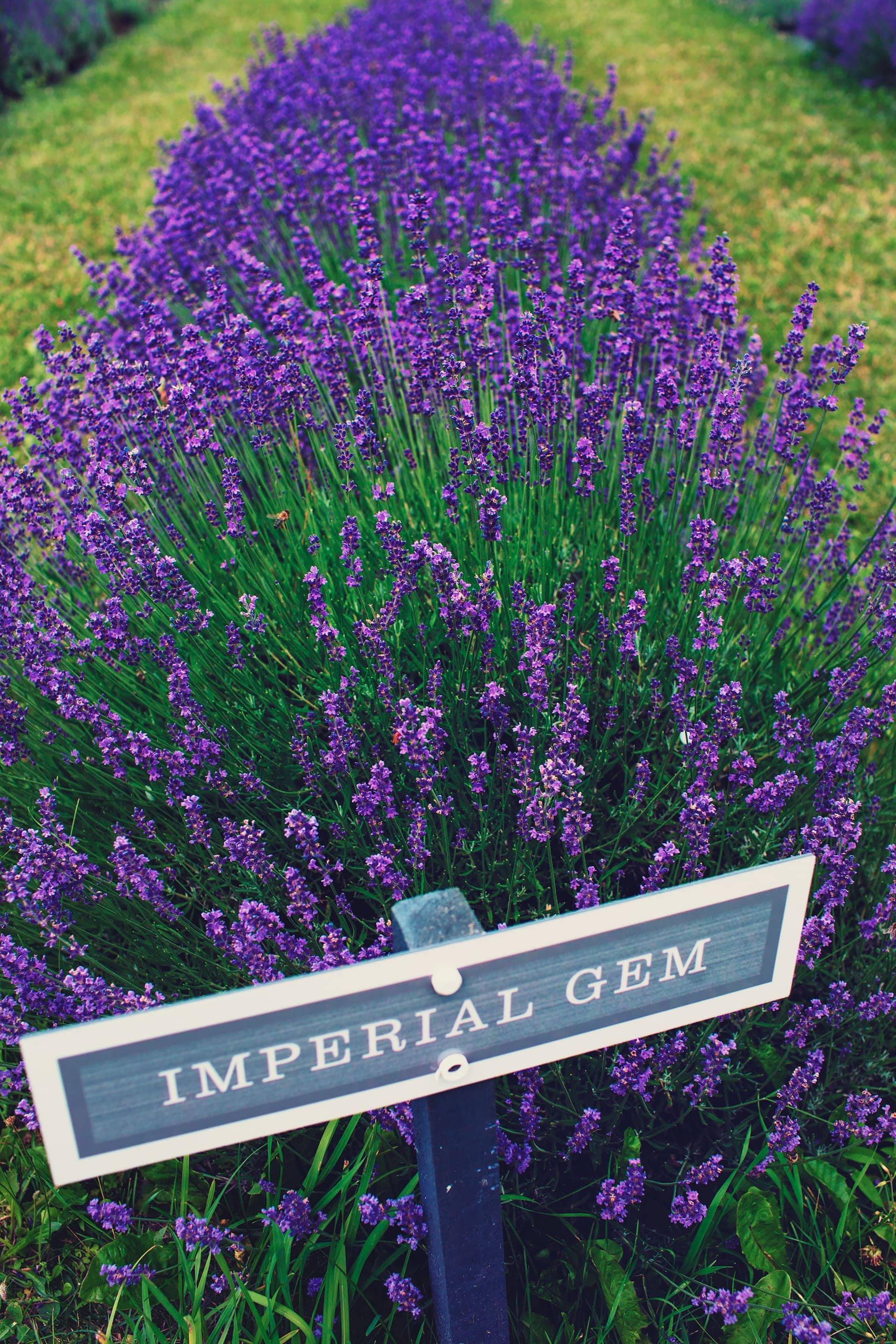 Signpost for type of lavenders at Terre Bleu Lavender Farm
