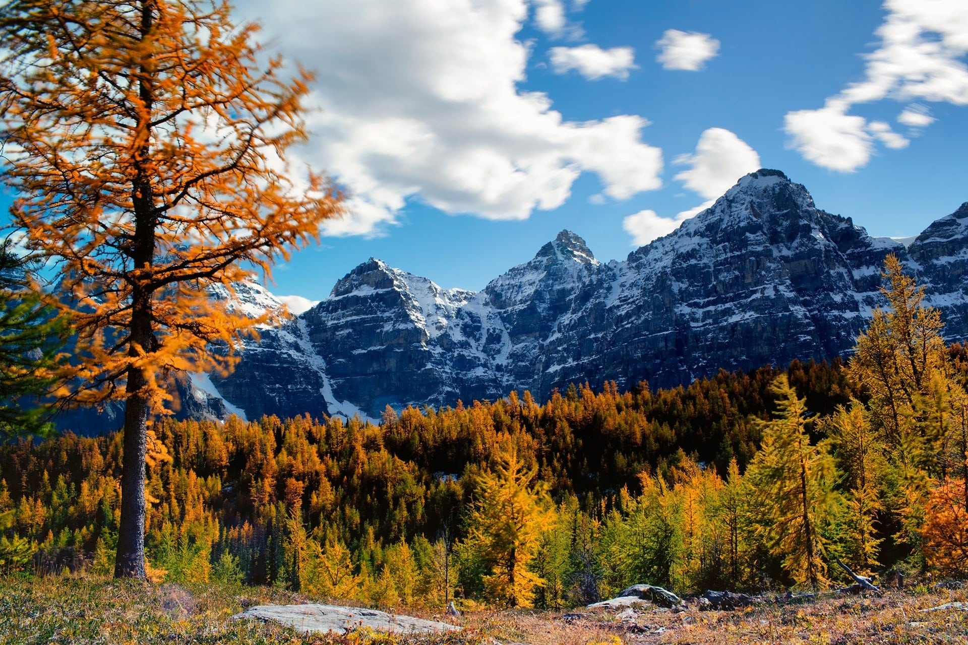 Golden larch trees surrounded by ice-capped mountain peaks at valley of the ten peaks hike