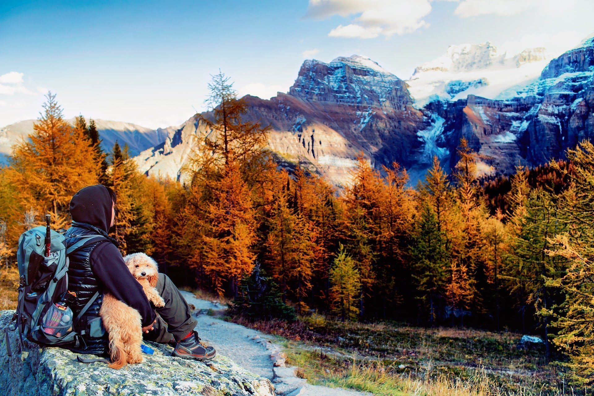puppy enjoying the view of larch valley with valley of the ten peaks in the distance at valley of the ten peaks hike in alberta canada