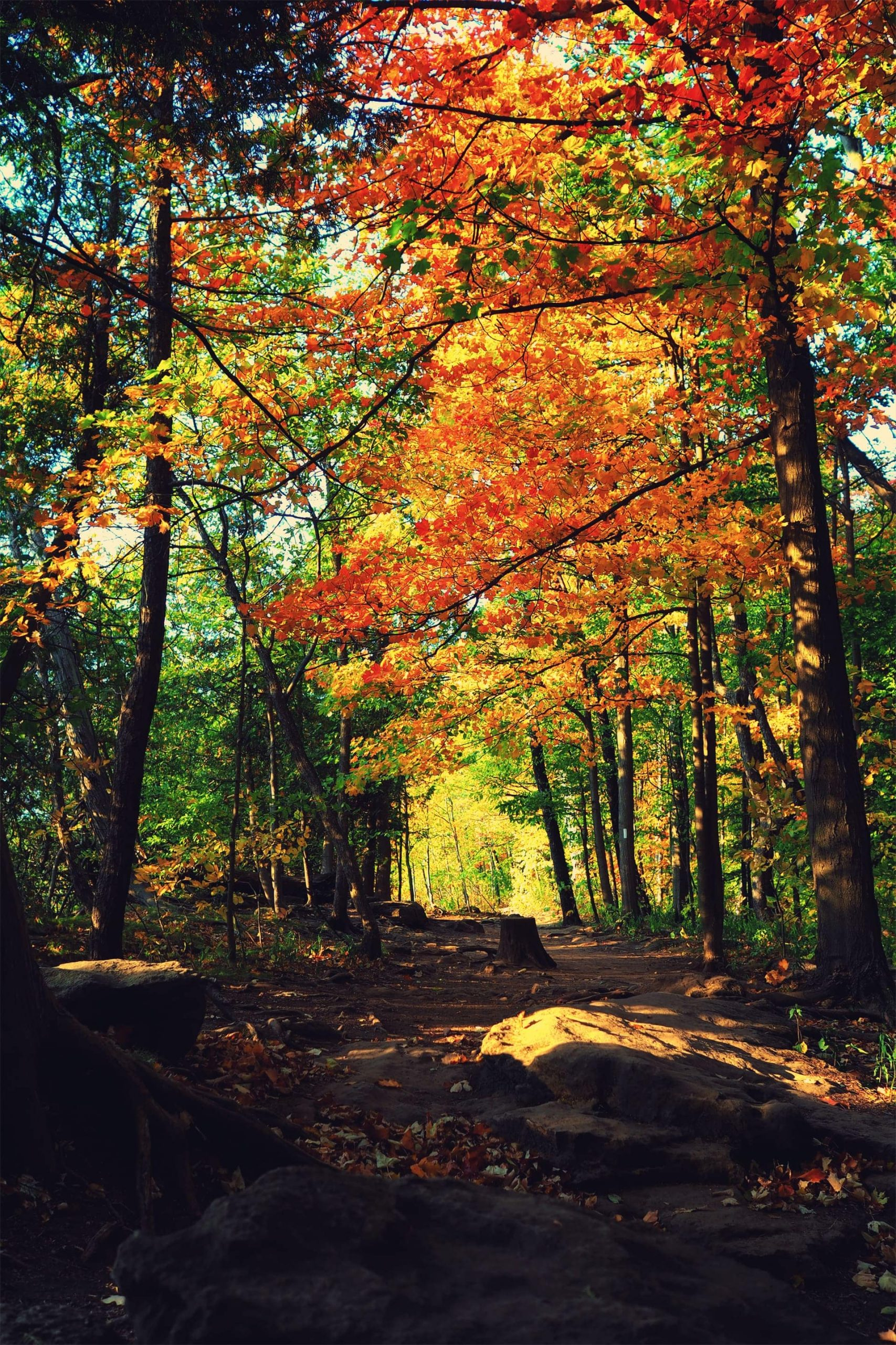 Lookout Trail: Best Fall Hike Date Spot in Grimsby
